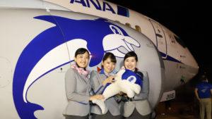 ANA、福岡空港で退役間近のスーパードルフィン 「ファン感謝祭」を開催